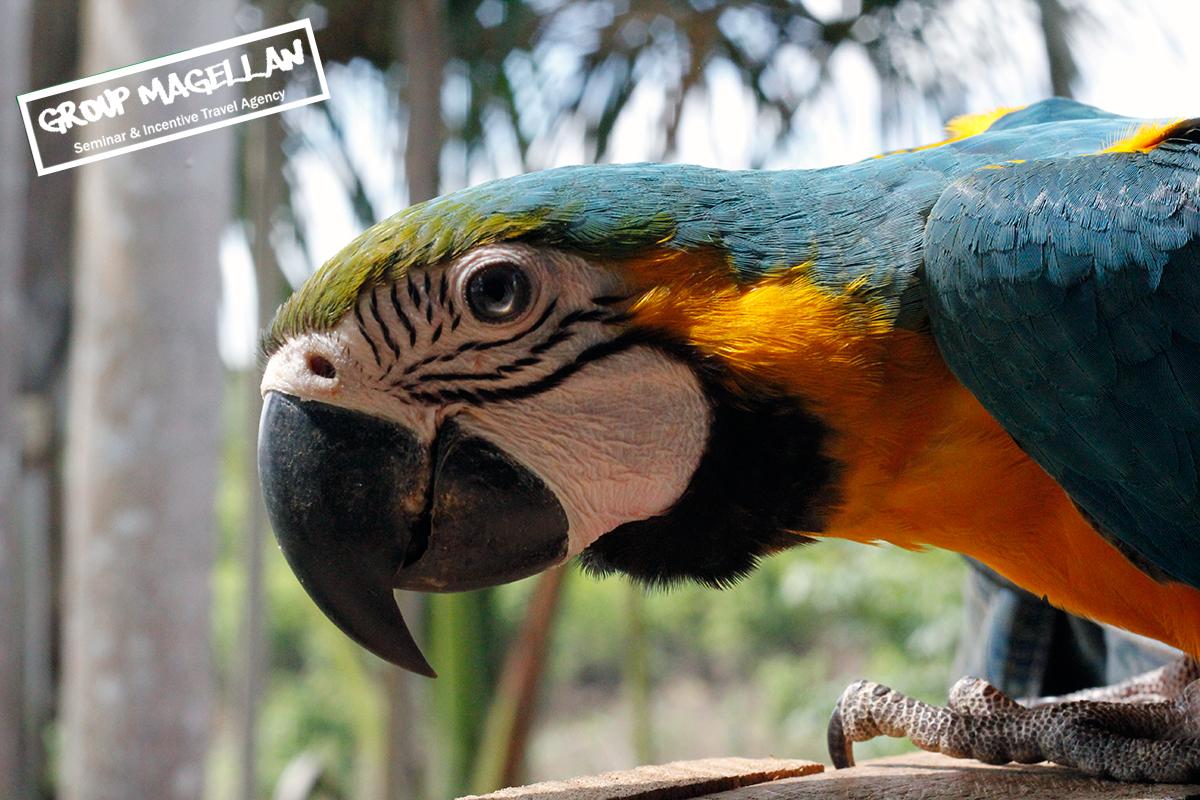 10-agence-tourisme-d-affaires-amazonie