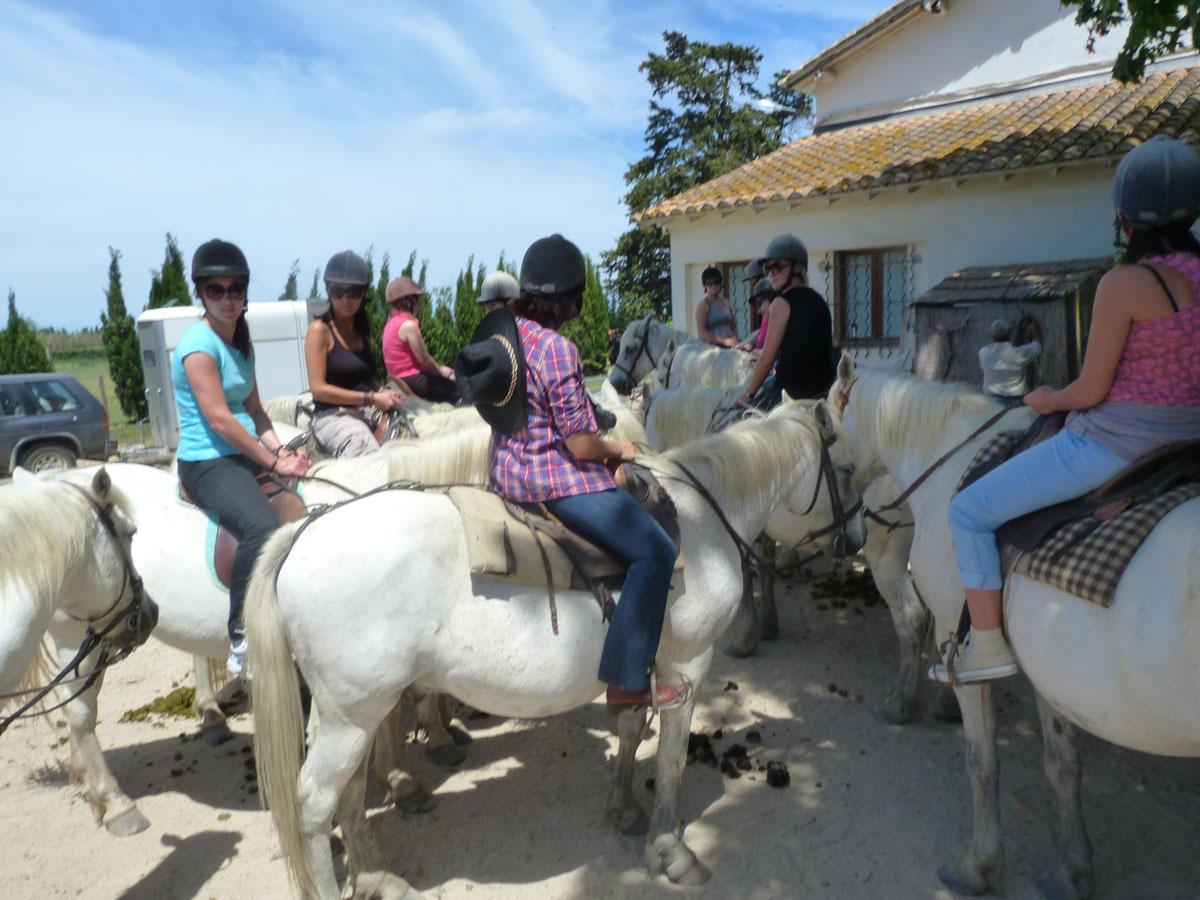 chevaux-de-camargue-de-sortie