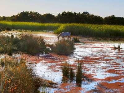 Voyage incentive en Camargue