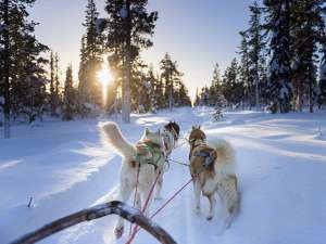 Voyage incentive en Laponie suédoise