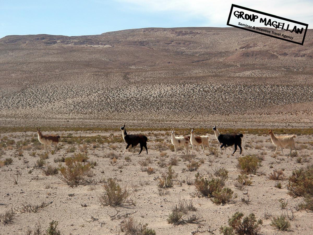 14-tourisme-d-affaires-bolivie