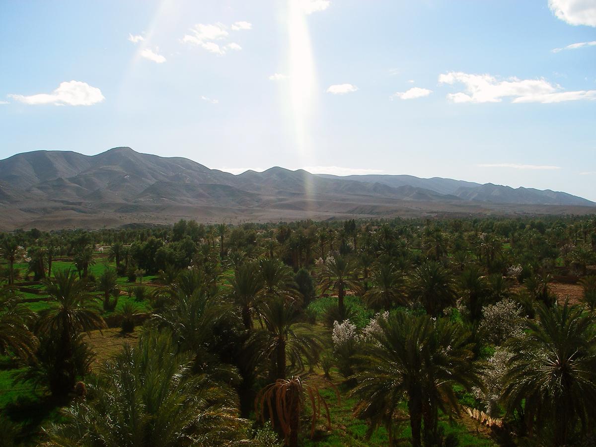 06-mice-marrakech-maroc