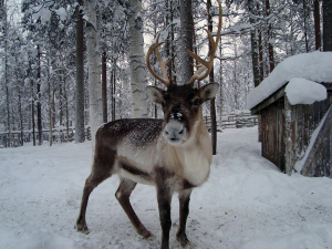 Voyage incentive en Laponie